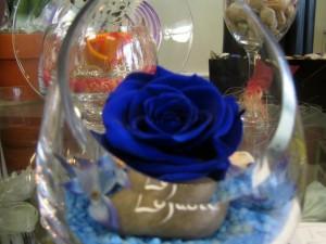 Rose Éternelle Bleue avec Vase