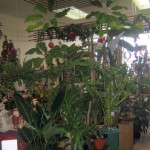 Podium à plantes