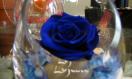 Fleuriste Gascon – Roses Éternelles